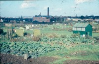 0002206_FourCorners_Photograph_WilfThust_HarryThorpe_ResearchOnAllotmentsInBirminghamSetupByProfessorThorpe_1975_Photo10.jpg