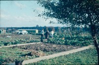 0002208_FourCorners_Photograph_WilfThust_HarryThorpe_ResearchOnAllotmentsInBirminghamSetupByProfessorThorpe_1975_Photo12.jpg