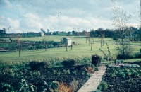 0002204_FourCorners_Photograph_WilfThust_HarryThorpe_ResearchOnAllotmentsInBirminghamSetupByProfessorThorpe_1975_Photo08.jpg