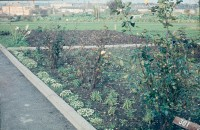 0002202_FourCorners_Photograph_WilfThust_HarryThorpe_ResearchOnAllotmentsInBirminghamSetupByProfessorThorpe_1975_Photo06.jpg