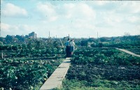 0002209_FourCorners_Photograph_WilfThust_HarryThorpe_ResearchOnAllotmentsInBirminghamSetupByProfessorThorpe_1975_Photo13.jpg